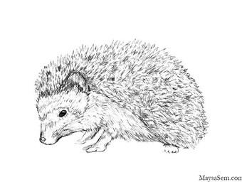 Hedgehog - Art Print