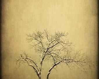 Fine Art Photography Print-Rustic Home Decor-Southwestern Art-Tree,Landscape Fine Art Prints