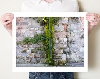 Rustic fine art photograph, green urban nature artwork. Berwick, Northumberland photography print in sizes 5x7, 8x10, 11x14, 16x20, to 30x40