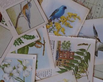 Birds & Botanicals Paper Packs / Vintage Field Guide Plant Botanical Flowers Birds Trees Weeds Scrap Paper / Old Field Guides Art Reuse Fun