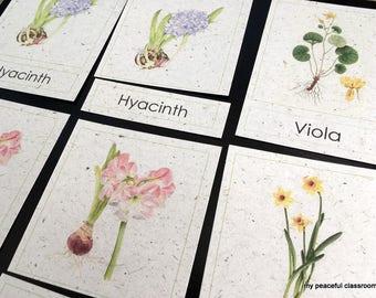 Botanical Illustrations of Flowers: Montessori 3-Part Matching Cards