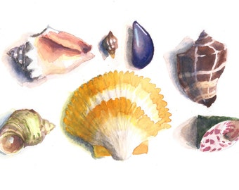 Watercolor Seashell Print 8 x 10
