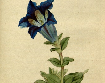 Botanical chart, Beautiful flowers, Flower painting, Botanic art, 52