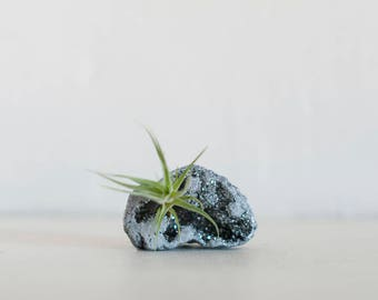 Air Plant Terrarium, Air Plant, Airplant on Silver Aura Quartz Geode, Desk Decor, Boho Decor, Gift for Him, Birthday Gift, Crystal Air Plant