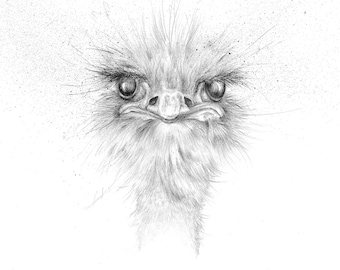 "Limited Edition Giclee Ostrich Art Print ""Alfred"""
