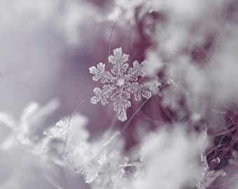 Snowflake, Winter Photography, Fine Art Print, Original, 5 inches by 7 inches-Winter, Macro, Wall Art, Wall Decor, Home Decor, Purple, White