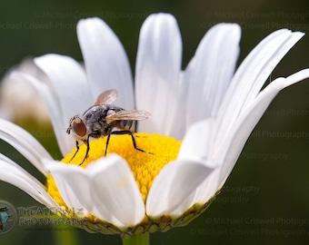 Bee Macro Fine Art Print