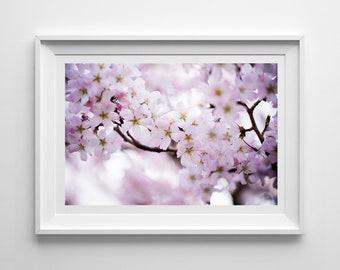 Nature Photography, Pink Blossom, Spring Flowers, Original Print, Floral, Landscape, Botanical Wall Art, Decor