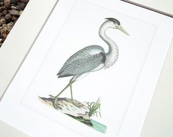 White Crane 2 with Pale Blue Water Fine Art Archival Print