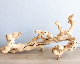 Unique Grapewood Branches + Glue - Perfect for Your Air Plants - Fast FREE Shipping - 30 Day Guarantee - Air Plant Driftwood