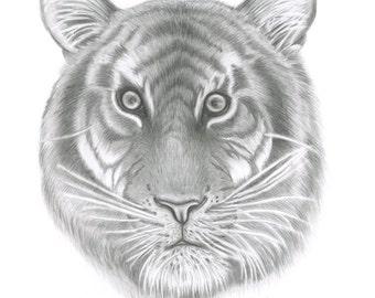 Tiger giclee print/ A3 tiger fine art print/ tiger graphite drawing