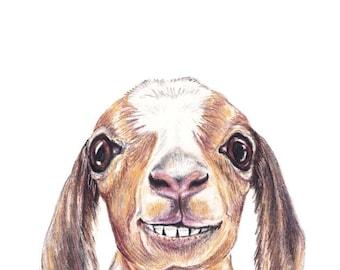 Coloured Pencil Drawing of an Adorable Baby Goat - Barnyard Animal Art Print, Nursery Decor for Boys and Girls