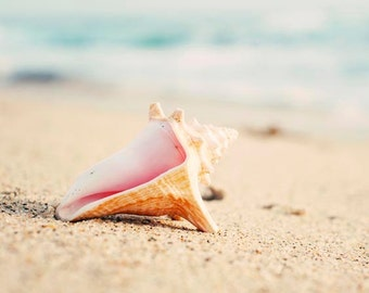 "Sea Shell Photography Beach Decor Conch Shell Print Aqua Beige Coastal Wall Art Beach House Bathroom Decor Seashell Print ""Conch Shell"""