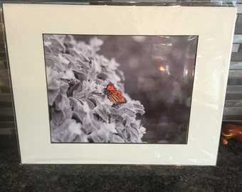 Black and white with color butterfly 8x10 matted