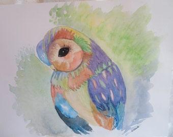 Shy Owl