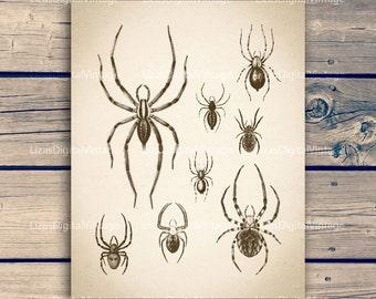 Digital artwork, Insect artwork, Insect art vintage, Spider art, Antique print, Download art, Spider printable, 11x14 print; 8x10 print