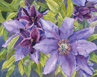 purple - clematis - purple clematis - flowers - floral - garden - summer - watercolour - giclee print - watercolour print
