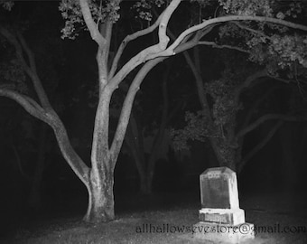 Tombstone under a tree