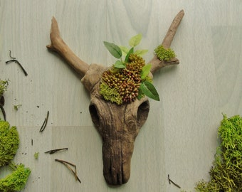Small Faux Cow Skull 'Oakley' - Hand Sculpted Clay - Hand Painted - Unique Home Decor - Decorative Skull - Faux Taxidermy - Faux Succulents
