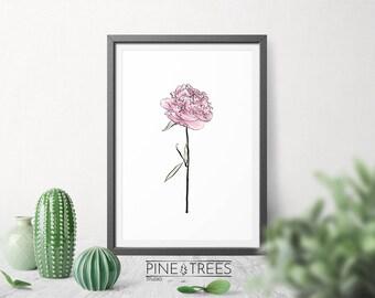 Shabby Chic Peony flower, printable wall art, living room decor, digital download