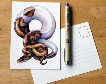 Pied Ball Python postcard illustration