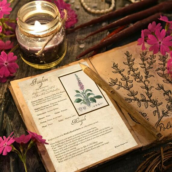 Foxglove Magick Herb