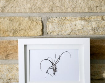 Abstract Black and White Horizontal Air Plant Spring Summer Home Decor Art Minimalist Photograph Print