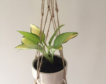 Small Macrame Plant Hanger with Potted Plant