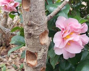 Rustic Log Birdfeeder, Peanut Butter Wild Bird Feeder, Suet Feeder, Gardener Gifts