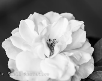 Fine art photography, black and white photography prints, download, printable art, wall art, floral print, white