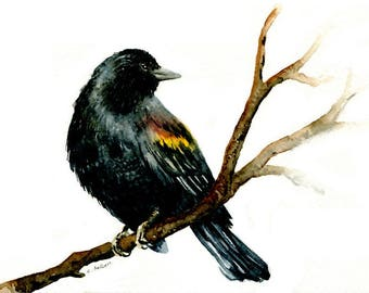 Watercolor of a Red-Winged Blackbird 5 x 7 Original Painting