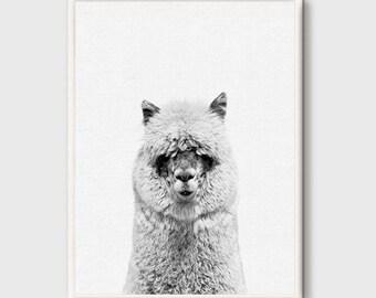 Alpaca, Alpaca Print, Nursery Animal Wall Art, Animal Portrait, Animal Photo Print, Kids Animal Art, Animal Decor, Peekaboo Decor