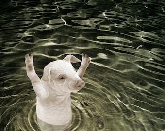 Animal Pig Print, When Pigs Swim, Original Fine Art Print