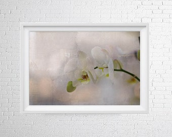Instant downloud Orchid Flower,Fine Art Photography,White Print,Flower Photography,modern home decor,wall art prints,flowers print
