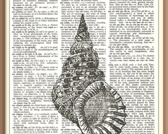 Giant Shell---Vintage Dictionary Art Print---Fits 8x10 Mat or Frame