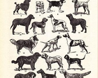 vintage dog print, 'Representative Types of Dogs' printable digital image no.  1472