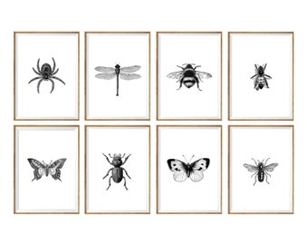 Insect Art Print SET of 8. insect wall art, insect art prints, insect wall decor, insect illustration, insects drawing, black and white art