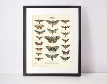 Butterfly and moth print | Nature prints, insect, botanical, wall art, room decor, vintage print, watercolour | High quality print
