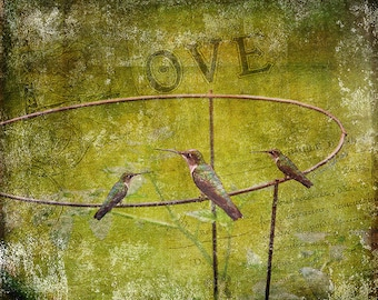 Birds on a Wire - mixed media, altered art, home decor, wall art, hummingbird photography, photo montage, collage, digital art, assemblage