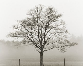 black and white photography, tree photography, tree print, landscape photography, fog photography, fine art photography, cades cove, trees