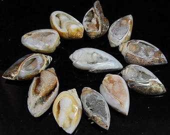 490 CTS aaa 100% natural wholesale lot Vintage FOSSIL SHELL druzy piece 12 loose gemstone cabochon size=26 to 37 mm (approx)