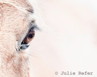 Horse Photography Abstract Horse 8x10