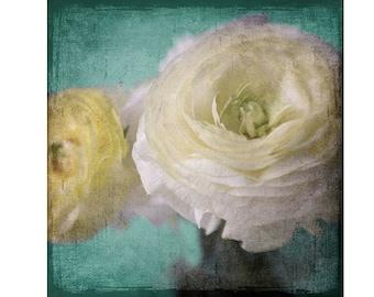 Ranunculus Photograph, Floral Art Print, Shabby Chic Home Decor. Flower Photography, Yellow Teal Wall Art