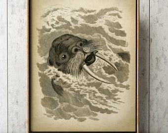 WALRUS print, WALRUS Poster, Marine Decor, Sea Life, Marine Mammal, Beach Home Wall Decor