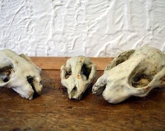 Ceramic Animal Skulls, fossil, possum, white, minimal, sculpture
