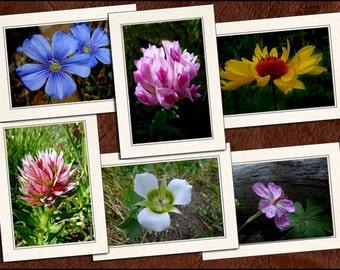 6 Wildflower Photo Note Cards Handmade Set - 5x7 Flower Note Cards - Blank Note Cards With Envelopes - Photo Greeting Cards Handmade (GP64)