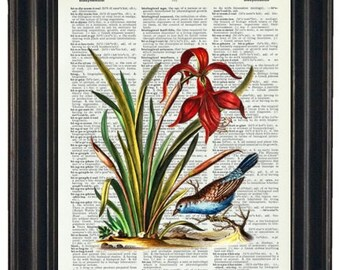 Botanical Print  Dictionary Art Print Wall Decor Bathroom Print on Dictionary Page Blue Bird with Red Flower