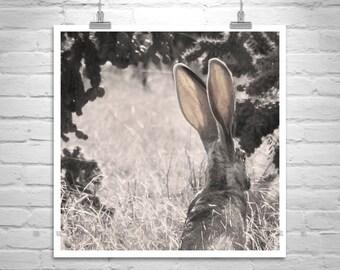 Jackrabbit Picture, Rabbit Photograph, Bunny Picture, Sepia Desert Art, Desert Rabbit, Desert Jackrabbit, Arizona Gift, Tucson Gift