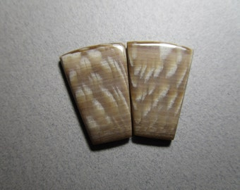 Fossilized Sycamore Pair of Cabs / Plates / Fossil Wood
