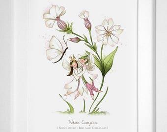 White Campion - Illustrated Art Print